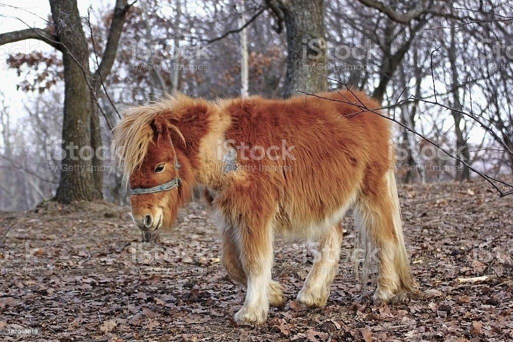 colorful donkey royalty-free stock photo