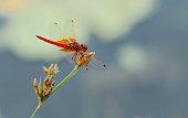 Colorful Dragon fly closeup macro photograph