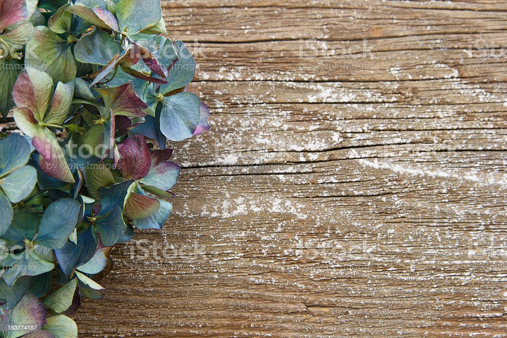 Colorful dried Hydrangea against rustic wood with copy space stock photo