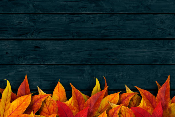 Colorful dried leaves on dark blue wooden background stock photo