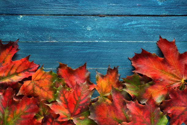 Colorful dried leaves on rustic blue wooden background with copy space stock photo