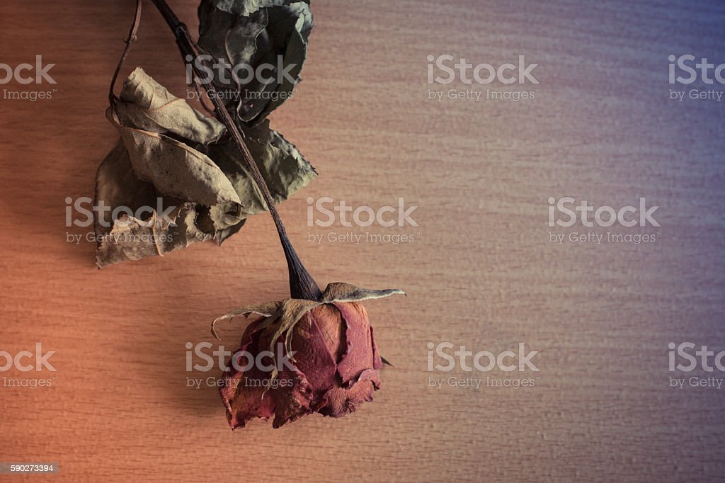 Colorful dried roses placed on a wooden table
