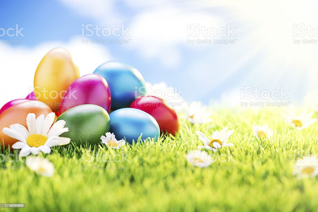 Colorful Easter Eggs and Daisy Flowers royalty-free stock photo