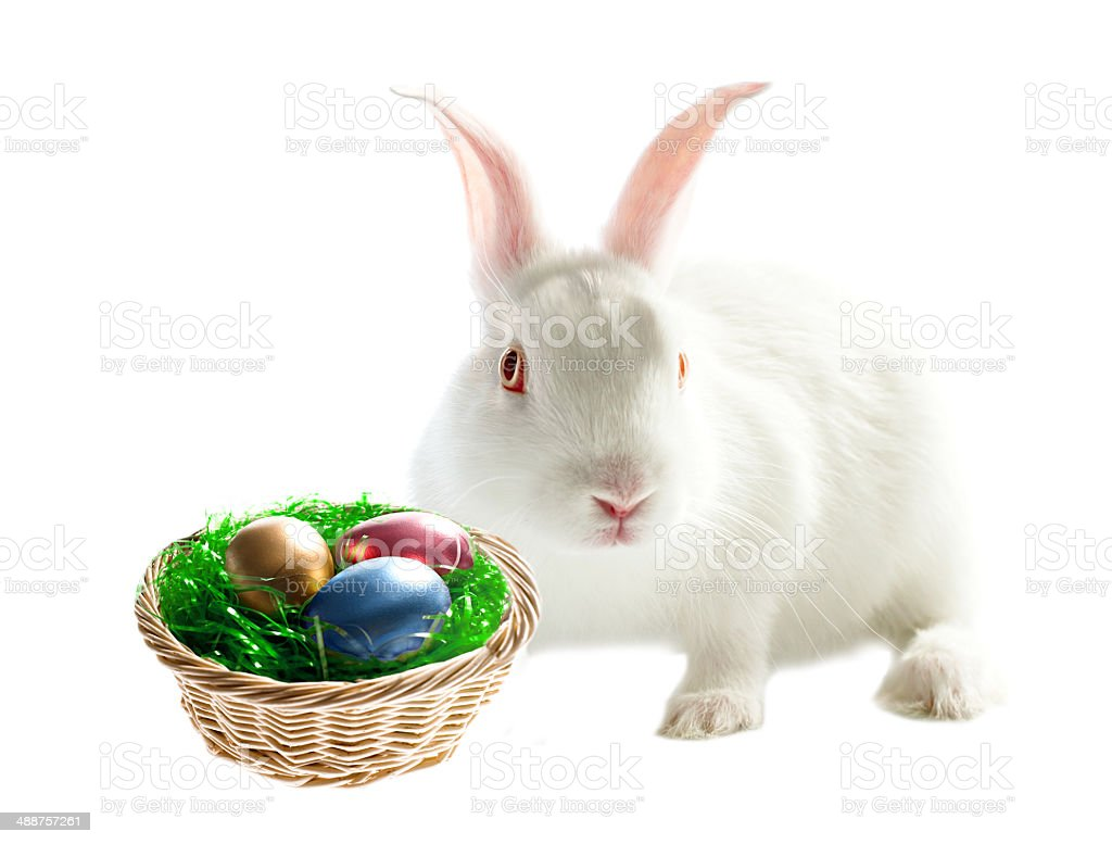 Colorful easter eggs and rabbit stock photo