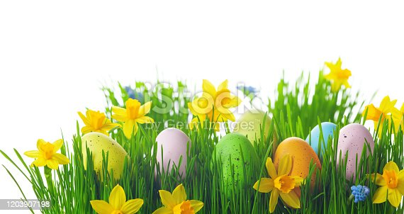 639245704 istock photo Colorful Easter eggs in green grass and daffodil flowers on white background. 1203907198