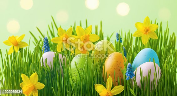 639245704 istock photo Colorful Easter eggs in green grass decorated with daffodil flowers. 1205569934