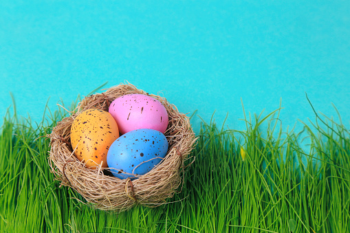 Colorful easter eggs in nest on turquoise background