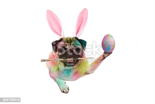 istock colorful easter pug dog bunny painting easter eggs, holding paintbrush 938789818