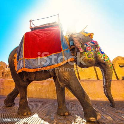 Indian elephant colorful painted