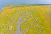 Colorful Estuary on the Alaska Peninsula in the Cook Inlet