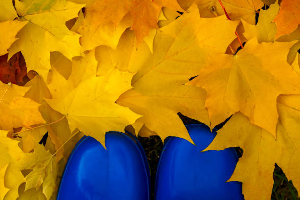 Colorful fall foliage and blue boots. stock photo