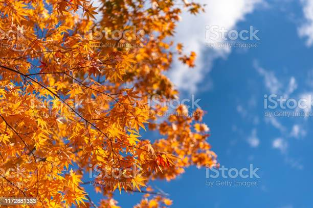 Photo of Colorful fall foliage in sunny day