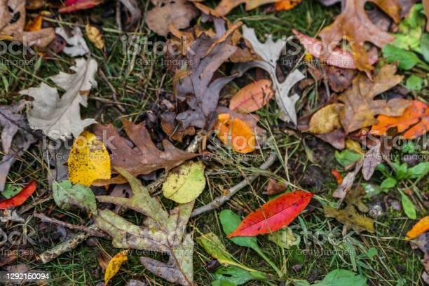 Photo of Colorful fall foliage