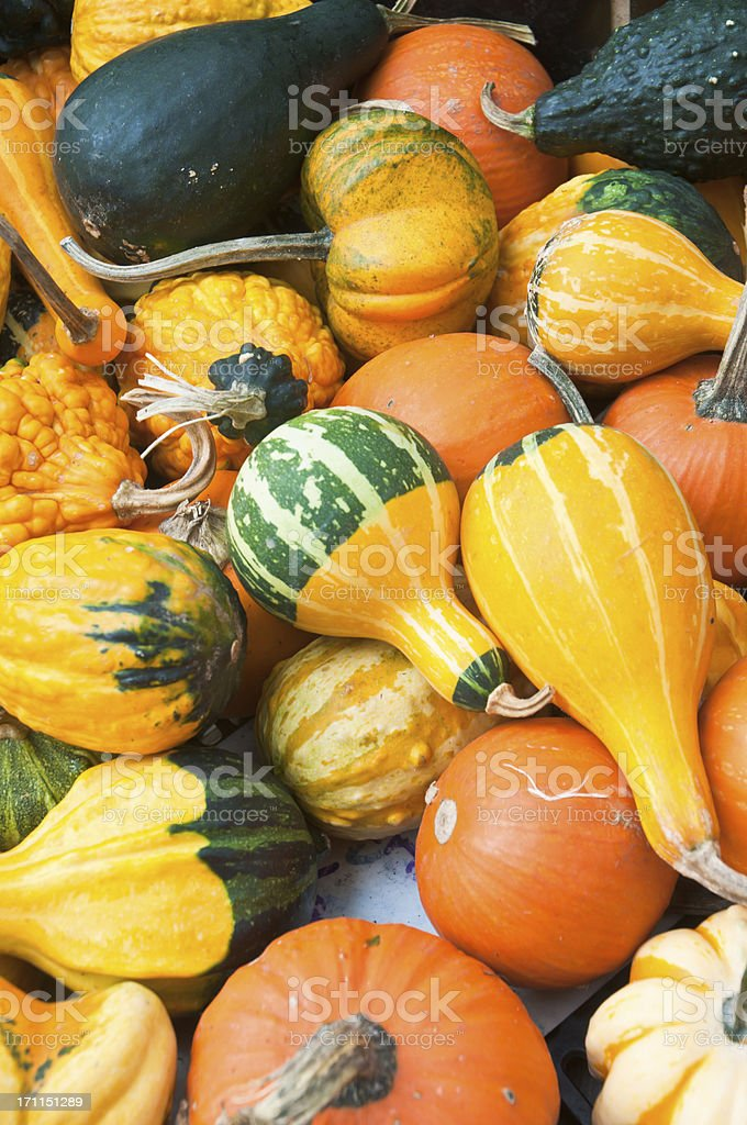 Colorful Fall Gourds stock photo