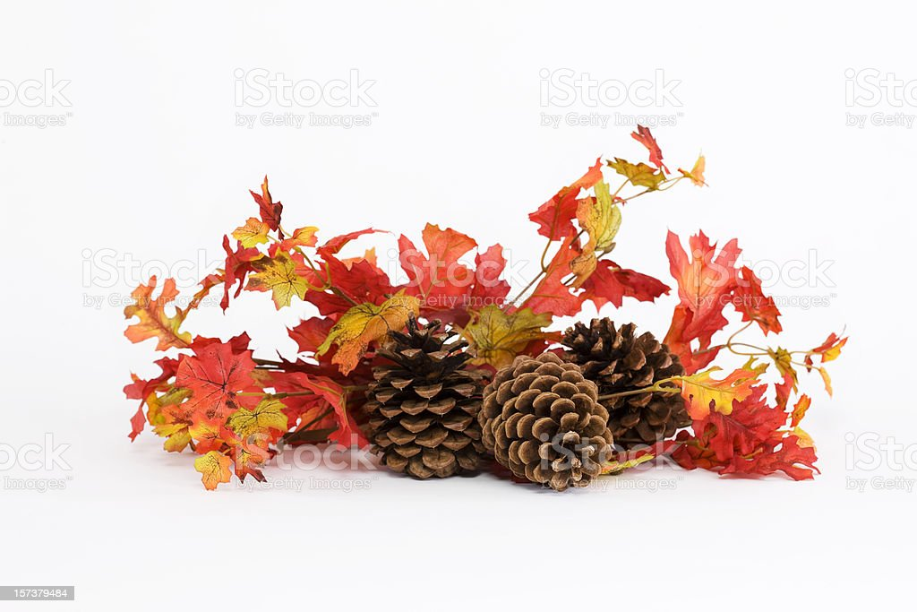Colorful Fall Leaves and Pine Cones on White, Copy Space royalty-free stock photo