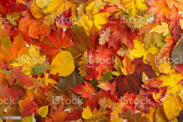 Photo of Colorful fall leaves as background. Autumn composition.  Flat lay, top view, copy space.
