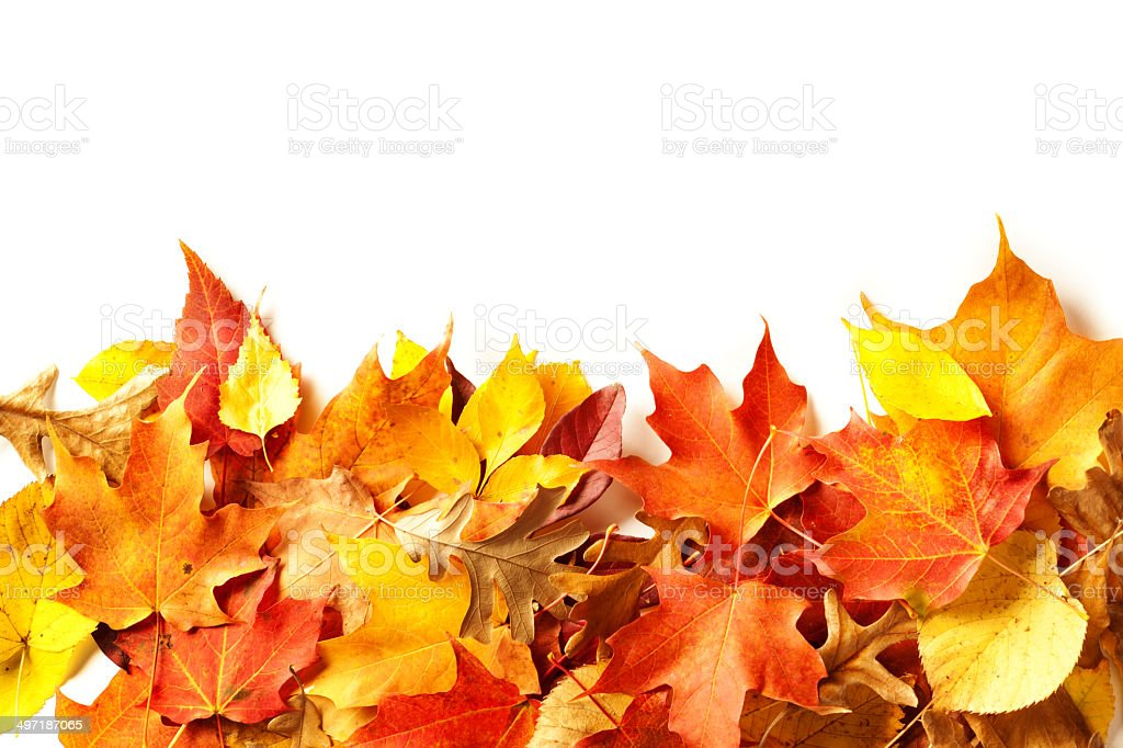Colorful Fall Leaves Bottom Border with Copy Space stock photo