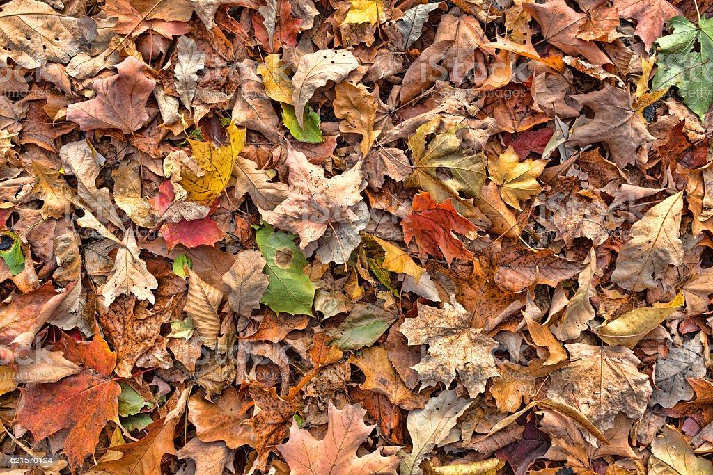 Coloré de l'automne laisse sur le sol photo libre de droits