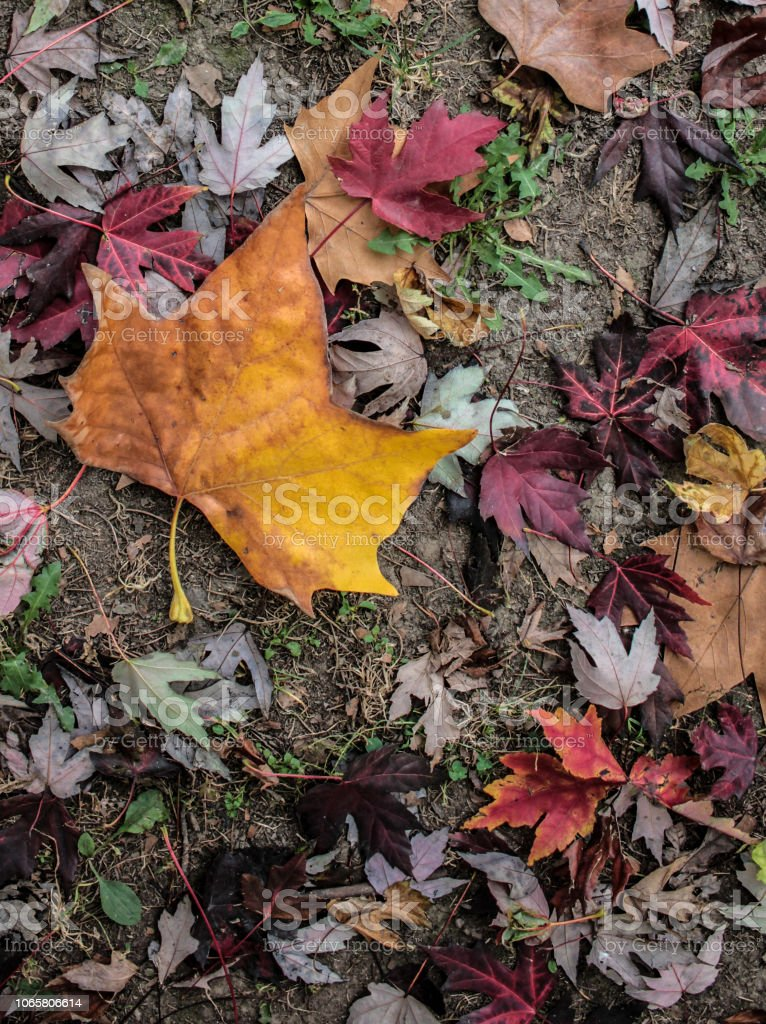 Colorful Fall Leaves - foto stock