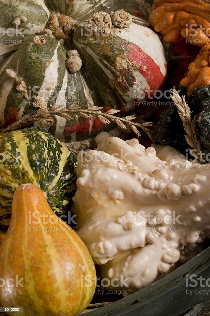 Colorful Fall Squash Assortment royalty-free stock photo