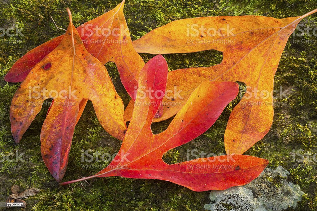 Colorful Fallen Leaves stock photo