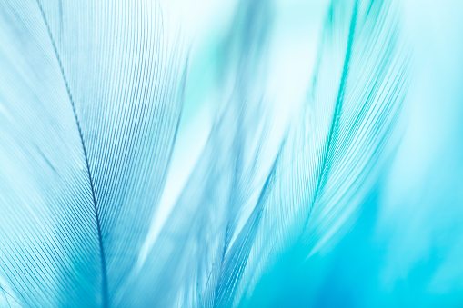 Colorful feathers background. Shallow DOF