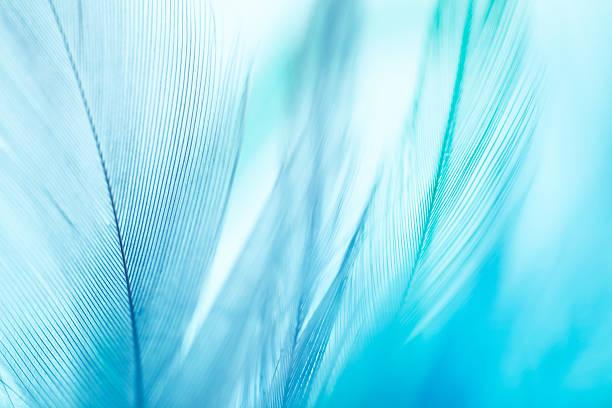 colorful feathers background - stekels stockfoto's en -beelden