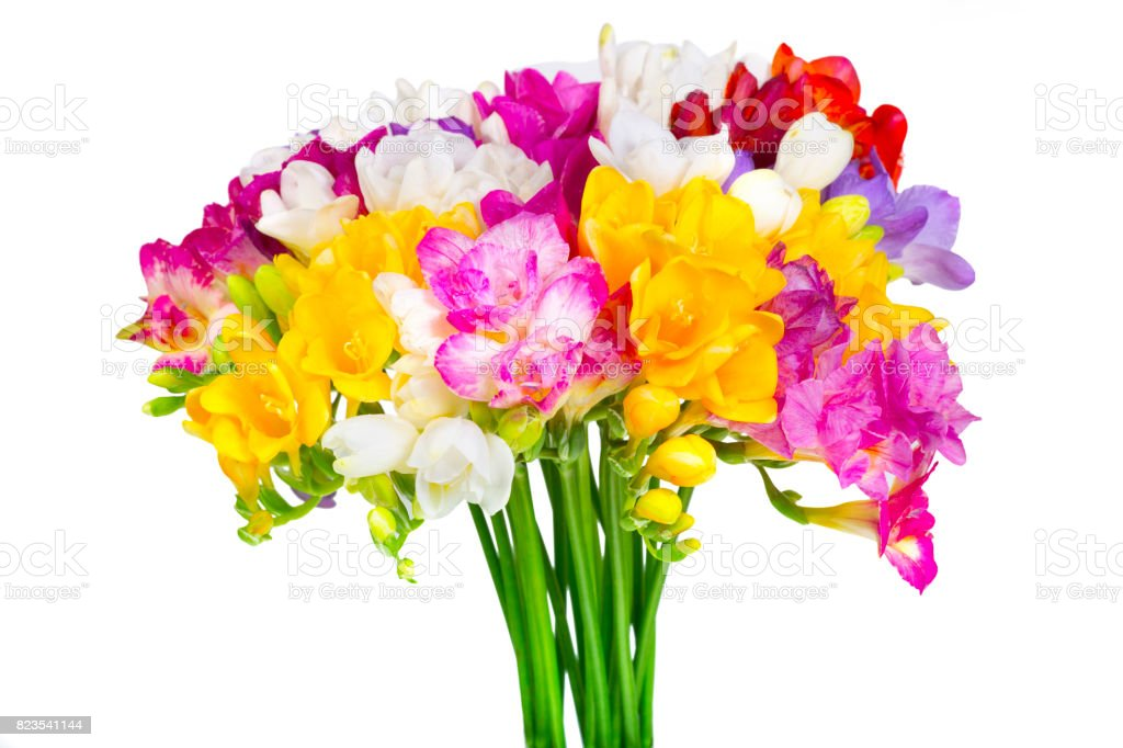 colorful feesia flower stock photo
