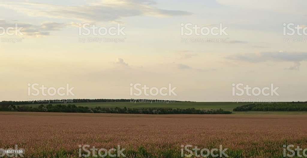 Colorful field at sunset royalty-free stock photo
