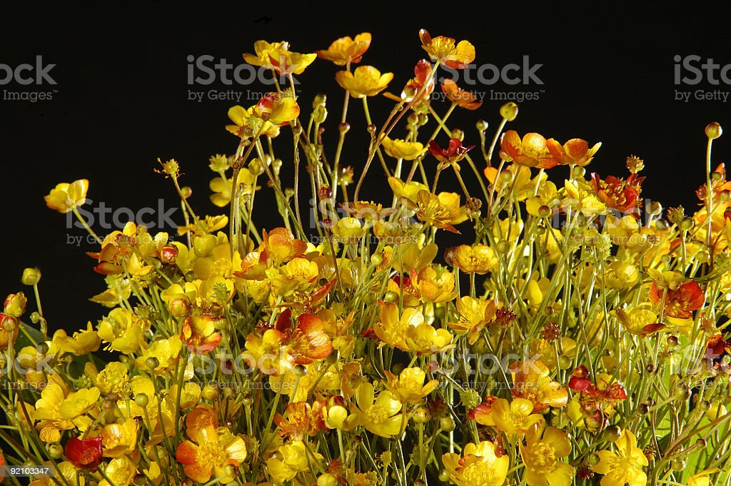 colorful field flowers stock photo