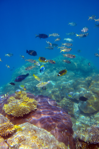 Colorful Fish and Underwater World