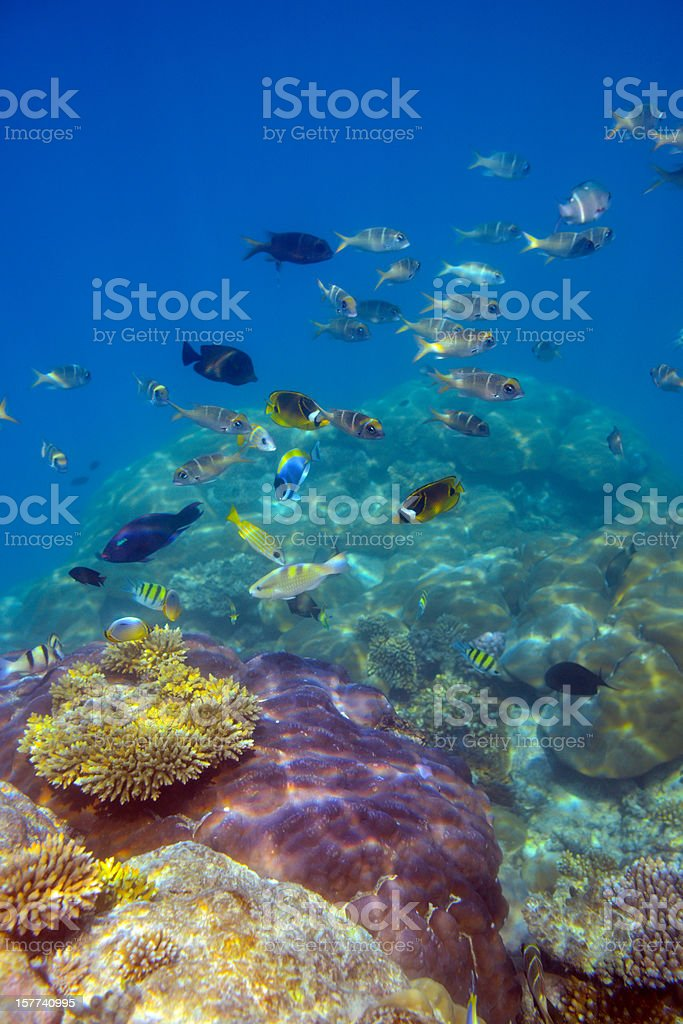 Colorful Fish and Underwater World stock photo