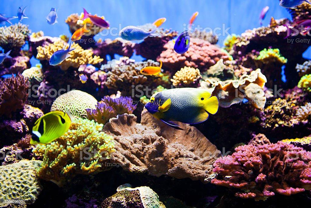 Colorful Fish Aquarium royalty-free stock photo