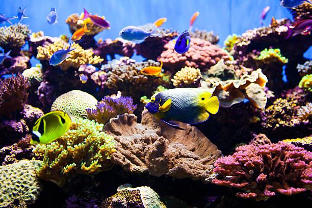 kolorowe ryba akwarium - tropikalna ryba zdjęcia i obrazy z banku zdjęć