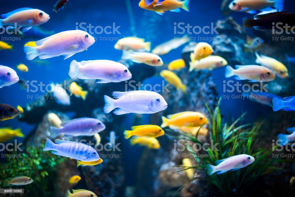 Colorful fish in aquarium stock photo