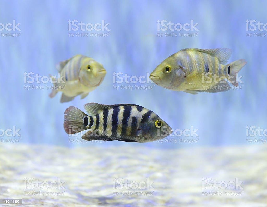 Colorful Fish Swimming Underwater stock photo