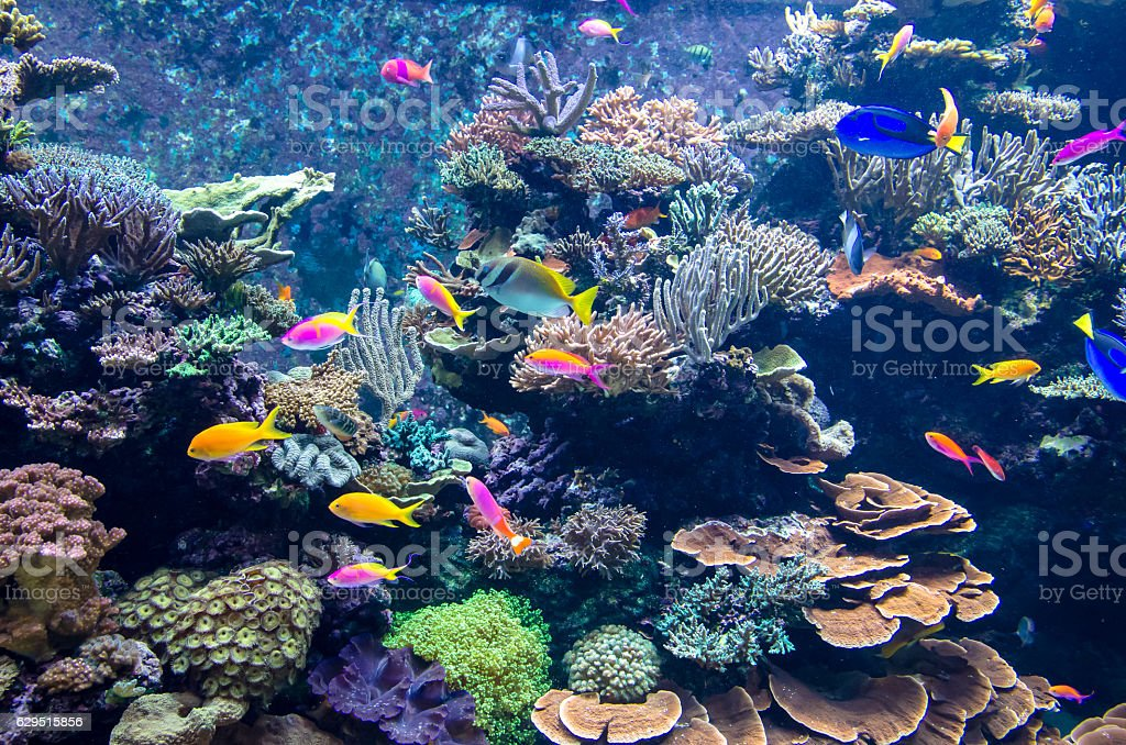 Colorful fishes and corals in the aquarium – zdjęcie
