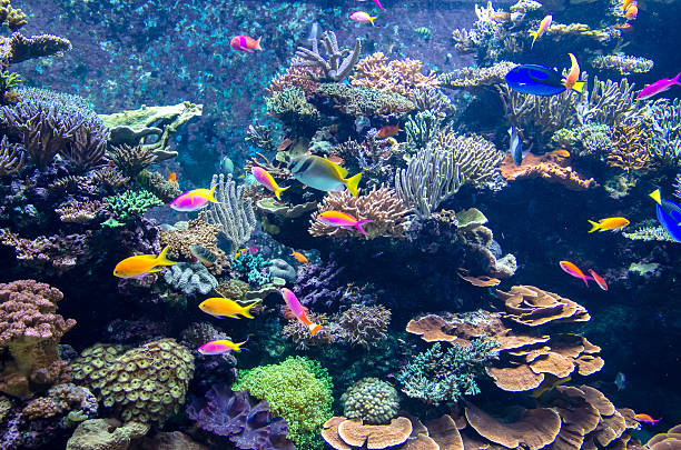 Colorful fishes and corals in the aquarium Colorful fishes and corals in the aquarium aquarium stock pictures, royalty-free photos & images