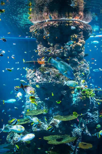 Bunte Fische im Aquarium, Singapur – Foto