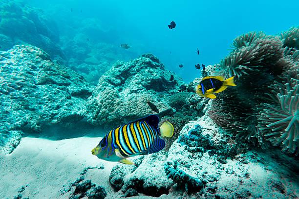 Colorful Fishes in Bora Bora, French Polynesia stock photo
