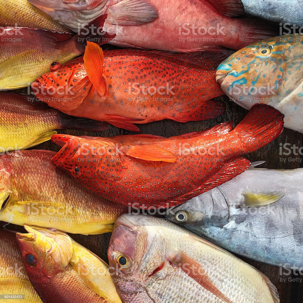 Colorful Fishes In Weligama Fish Market Sri Lanka Stock Photo & More ...