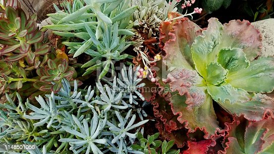 Tones of gray, aqua, green and burgundy are shown in this display of vivid and fleshy plant grouping