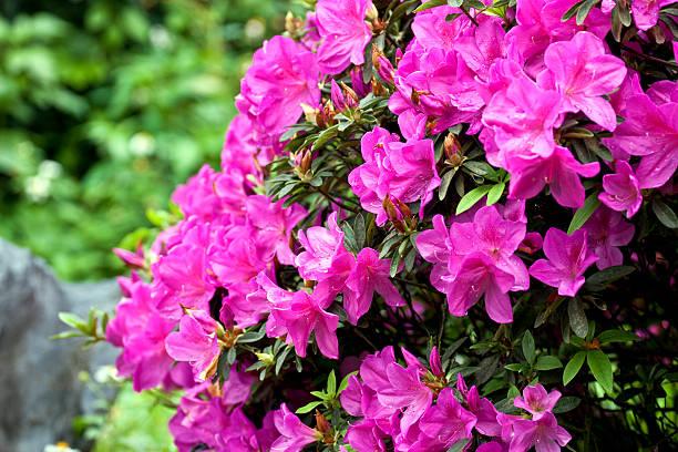 Colorful flora picture id177514323?b=1&k=6&m=177514323&s=612x612&w=0&h=8q5qpgbifpk2rgkw1zoffd7x9xnxzsqz0mr8ugv xc0=