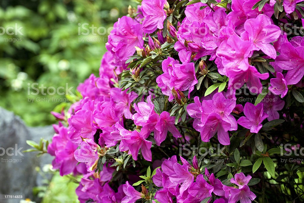 colorful flora stock photo
