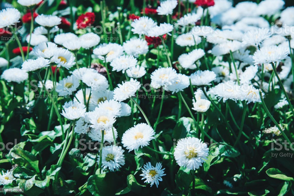 Colorful flower bed, island Mainau, Germany royalty-free stock photo