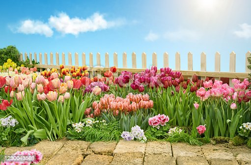 istock Colorful flower beds and pathway in Spring garden 1230043569