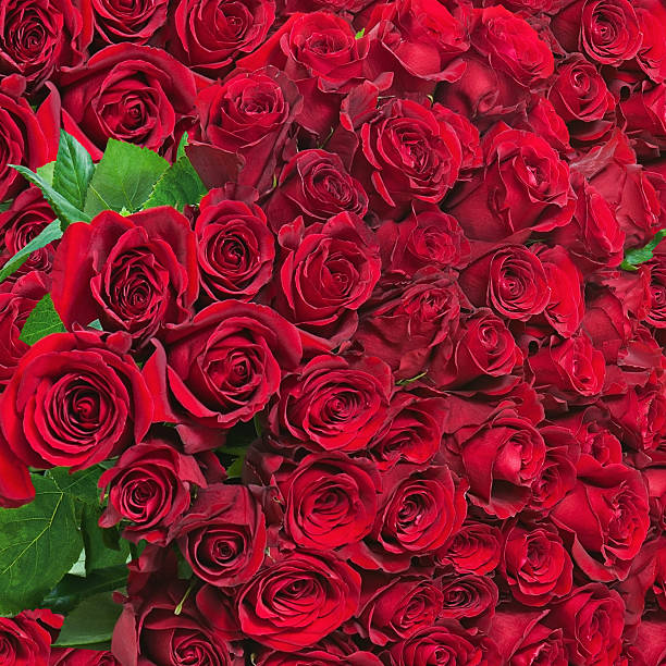 Colorful flower bouquet from red roses for use as background picture id533748441?b=1&k=6&m=533748441&s=612x612&w=0&h=oh45upspgxt ev rd2o7f jmzbswmnpkpyad vmp2gy=