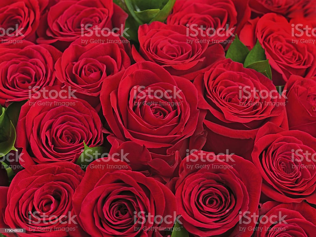 Colorful flower bouquet from red roses. royalty-free stock photo