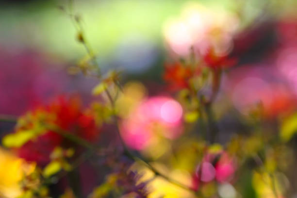 Colorful flower field background stock photo