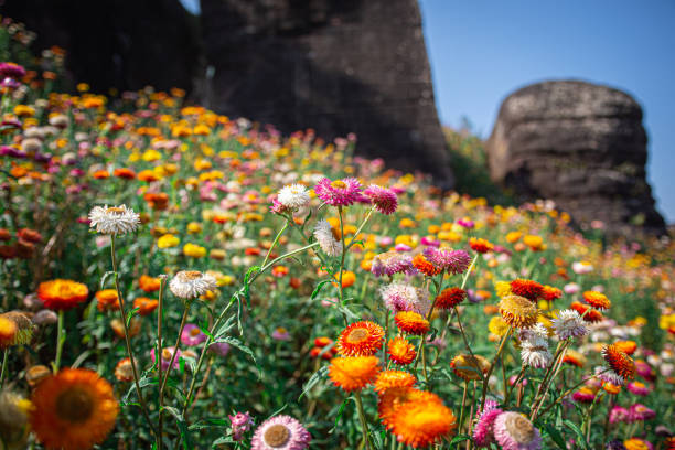 colorful Flower landscape witch blur background stock photo